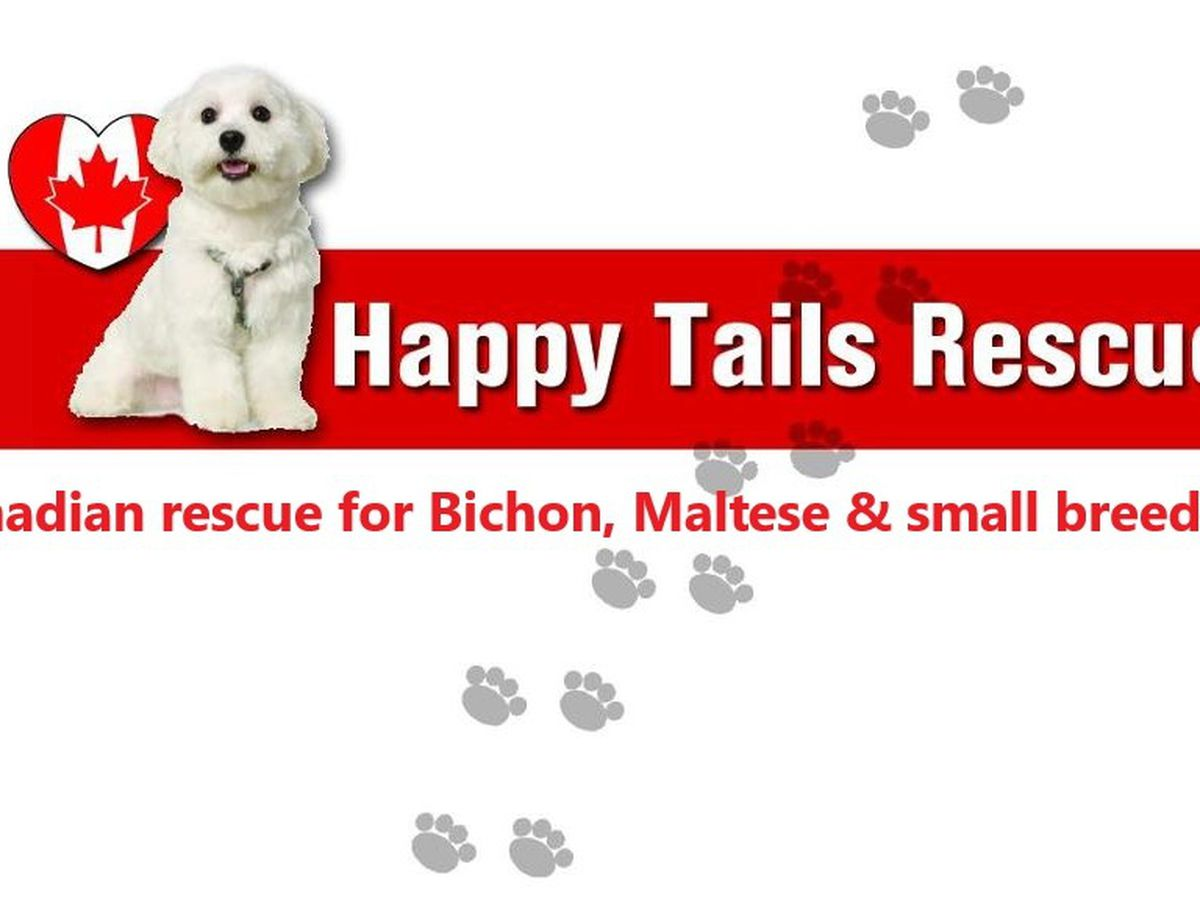 Fundraiser by Judy Keep : HAPPY TAILS RESCUE