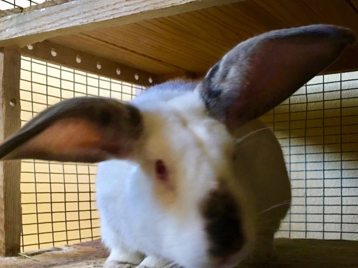 Fundraiser by Vicki A  : Bunny Emergency: Save Bunnies from