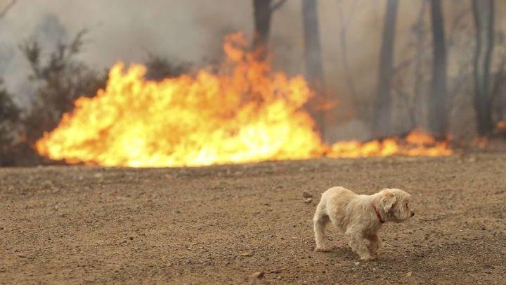 Fundraiser By Mel Kes Bushfire Medical Help For Animals